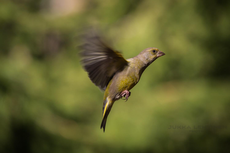 birdphotography 3