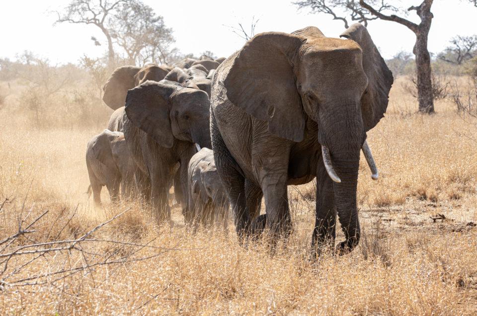 Kruger Park, self-drive safari Skukuza and Letaba
