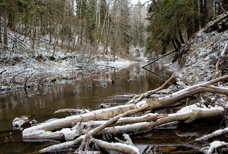 river runnig through winter forest
