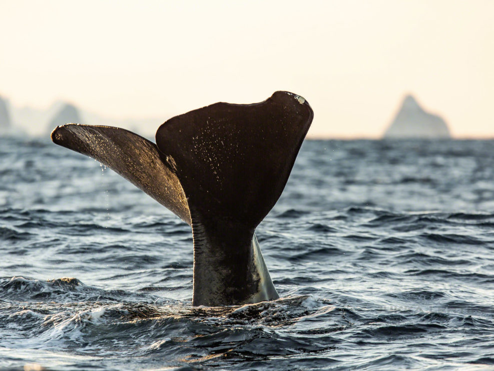 Whales and Northern Lights Andenes